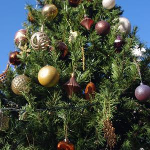 こにわん12月のパーティ☆クリスマス