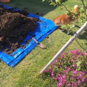 猫砂(ベントナイト)で池を作って大丈夫?