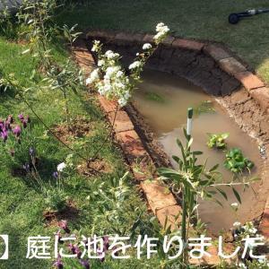庭にメダカ池をDIYで作った