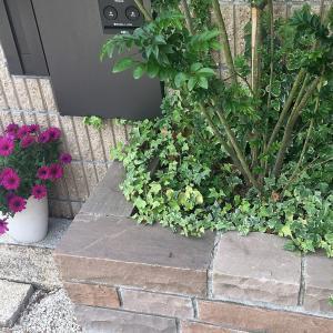 植えてはいけない植物を植えてみた結果こうなった