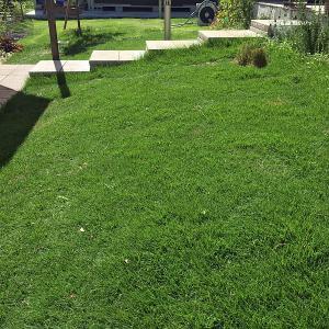 芝生は本当に管理が大変か?・・・広さによるでしょ(笑)