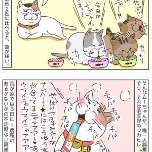 猫会のフカヒレ。〜どんな猫も抗えない魔法のおやつ〜