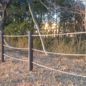 トンボ池の整備が始まる?①