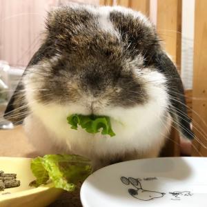しなしなお野菜