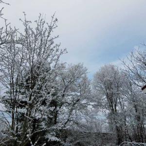 冬の北海道と副作用と