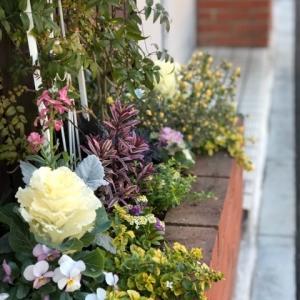 暖冬の花壇