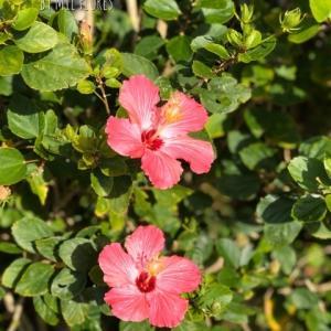 2月の沖縄