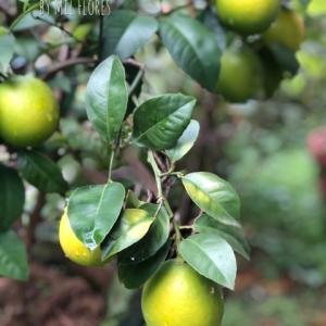 レモンがいっぱい…久しぶりのセビッチェ