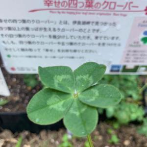 とっても軽い〜in東京✩︎⡱札幌 チャネリング講座 インナーチャイルド エネルギーcare