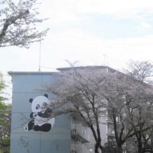 桜散る頃に ワクチン接種、1%からの出発