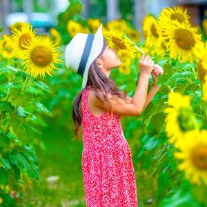 夏休みは向日葵🌻