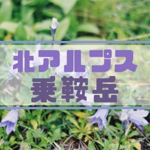 【北アルプス】乗鞍岳 お花畑を楽しみ、ご来光は見れない旅