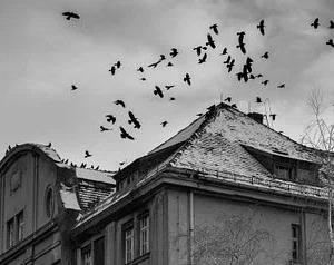 鳥が死ぬ家