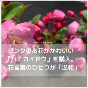 花言葉のひとつが「温和」。心和む可愛いピンク色の【ハナカイドウ】を購入。