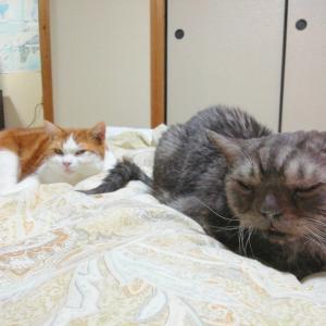今夜の2匹でおやすみニャさいでござる。