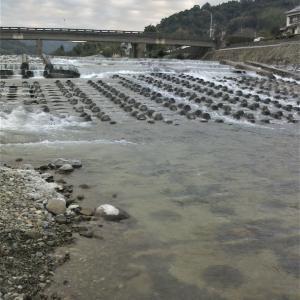 興津川承元寺で鮎釣り