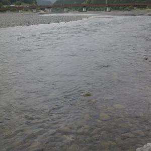 大井川鮎の食み跡で石が綺麗に磨かれています