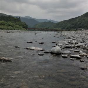 大井川笹間渡で鮎釣り