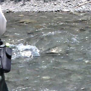 大水で大井川水系鮎釣りが出来ないので