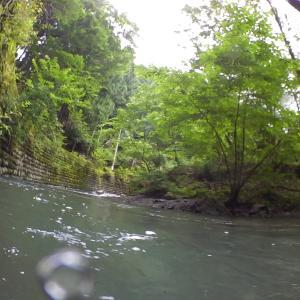 水中を撮ってみました