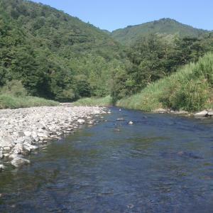 大井川も明日6月1日解禁ですが(´;ω;`)