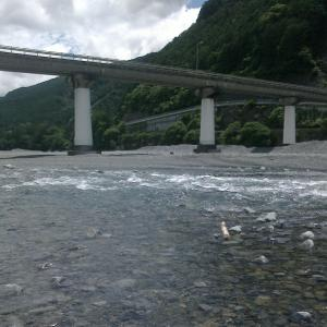 不調な大井川でもチビチビ釣れます