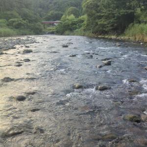 えーやま川で平瀬を攻める