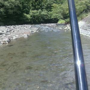 大井川支流家山川茶工場前追込漁で攻める