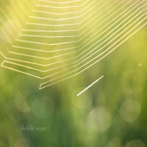 蜘蛛の巣の季節ですw