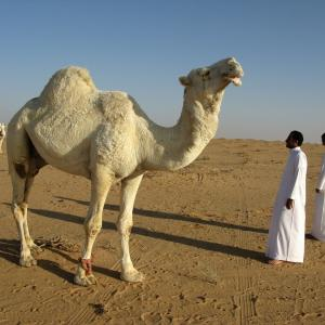 アラビアのバフェット を読んで