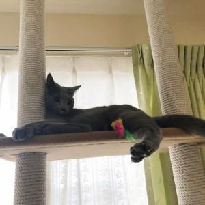タワーでネズミ遊び。