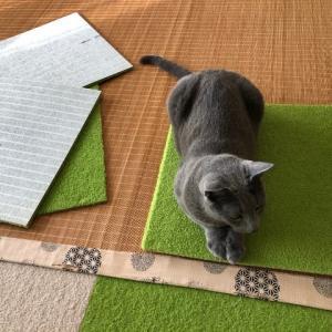 洗い立てのタイルカーペット。