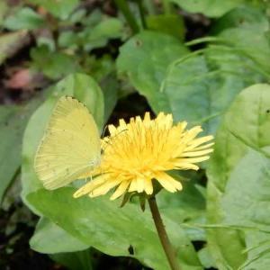 夏の蝶・・・