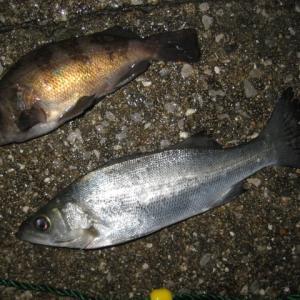 冬の荒津ふ頭でウキ釣り
