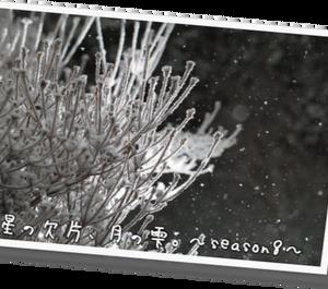 星の欠片、月の雫。81 - season 8 -