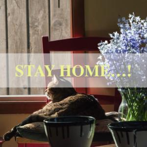 引き続き、Stay Home …!