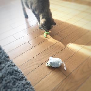 必ずもらえるおもちゃ付き!粉塵の少ない猫砂「カタピー」を注文したらこんなの届いたよ。