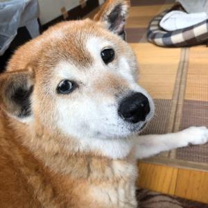 愛犬のマル