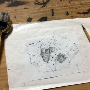 半紙の切れ端と植物の種
