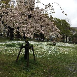 南青山だより 雪と桜と大都市の澄んだ空気