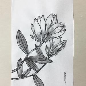 初夏に向かう花