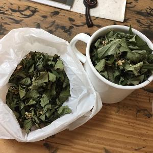 南青山産どくだみ茶