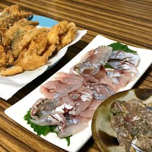 【釣り/レシピ】外房で釣ったシアマジを使ってお刺身・なめろう・アジフライ!美味しく調理