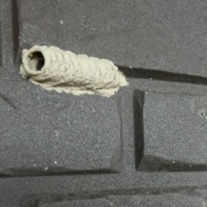 ドロバチの巣、かな?