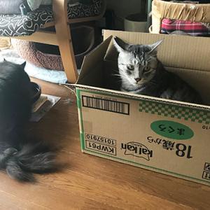 箱オトコ その2