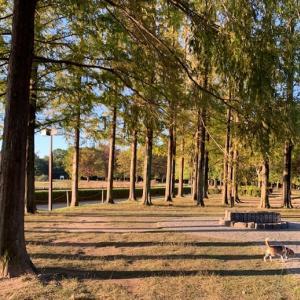 朝の風景(緑地公園)