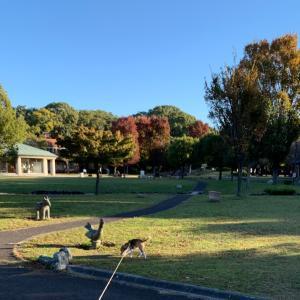 ハニワ公園