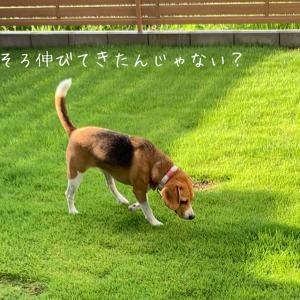 晴れた日には庭の芝刈りを