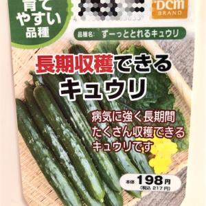 育てやすい品種「ずーっととれるキュウリ」の栽培日記。ベランダ菜園