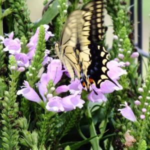 アパートの花 & 昆虫